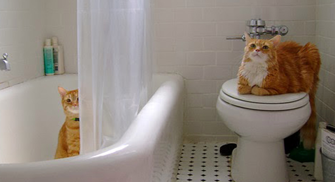 5 ragioni per cui il tuo gatto va e ti segue in bagno - Fare il bagno al gatto ...