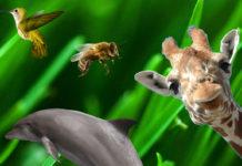 curiosità animali