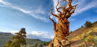 alberi più strani del mondo