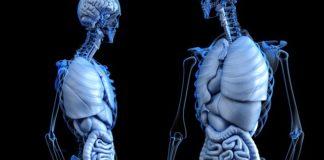 8 Parti del corpo che usavamo e che ora non ci servono più
