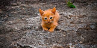 Nomi per gatti: come chiamare il proprio gatto con foto di 10 bellissimi esemplari