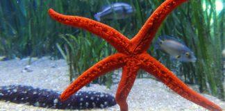 stelle marine più belle