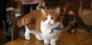 gatti piccolissimi